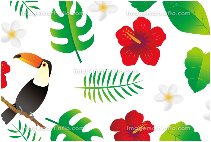 南国 亜熱帯植物の販売画像