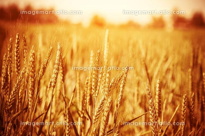 農業 養う 産業の販売画像