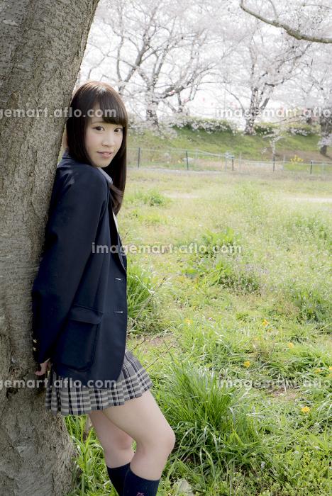 桜の木に寄り掛かる女子高生