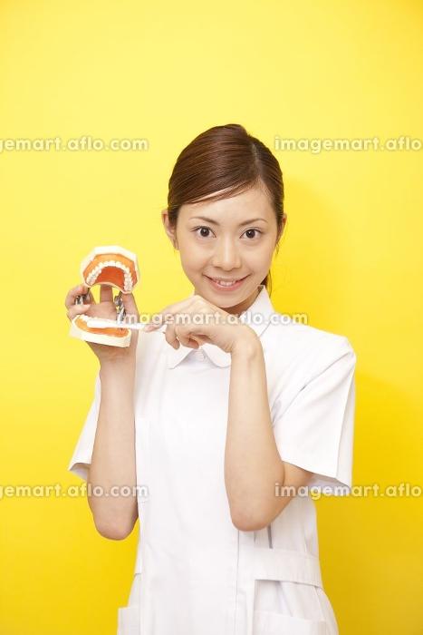 歯の模型と歯ブラシを持つ歯科衛生士の販売画像