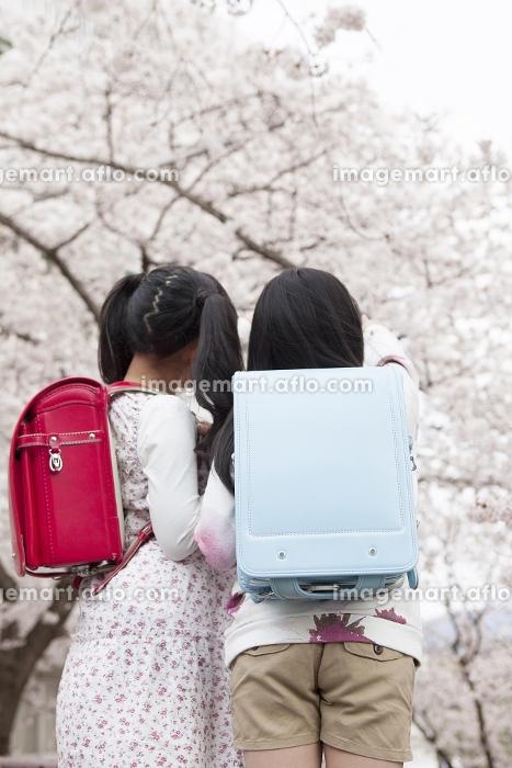 桜を指差す小学生の販売画像
