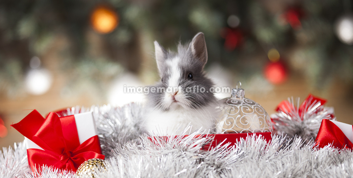 Rabbit in red santa hats, Holiday Christmas backgroundの販売画像