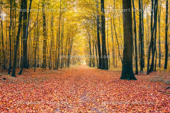 Autumn forestの販売画像