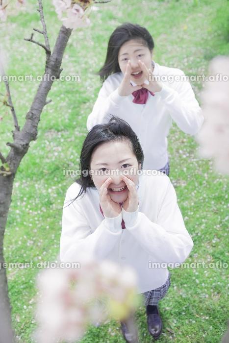 桜の木の下でかけ声を出す高校生の販売画像