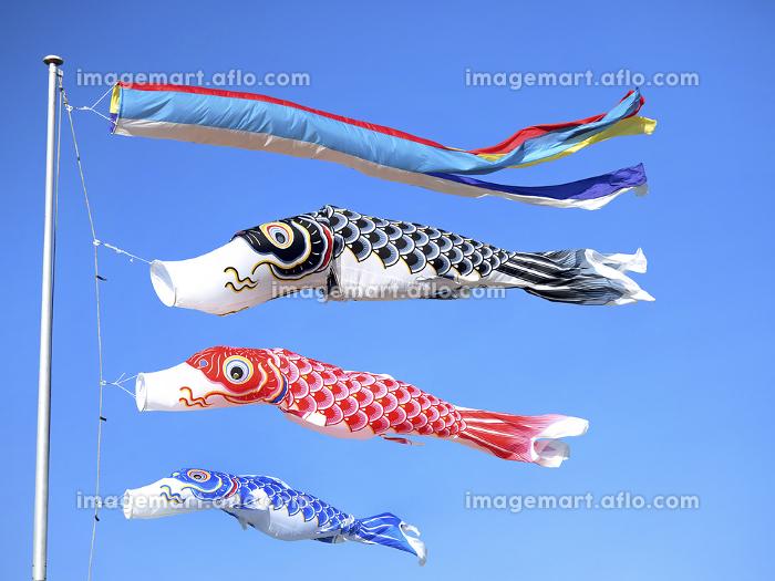 鯉のぼりの販売画像