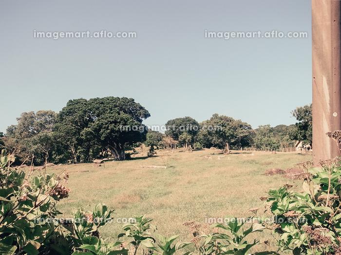 郊外の田園風景の販売画像