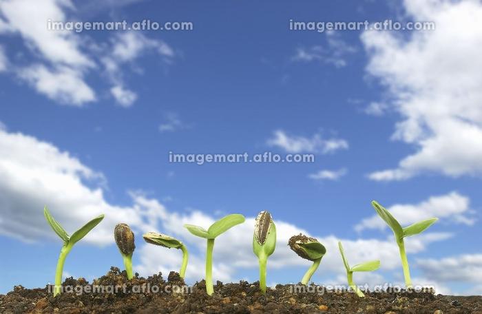 発芽と青空合成の販売画像