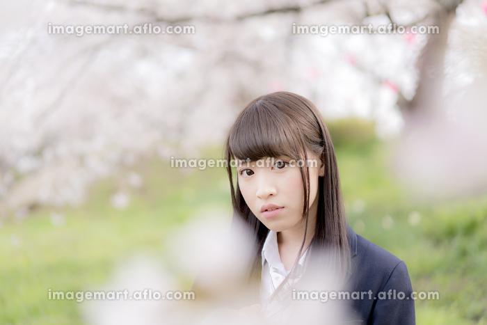 桜の下でたたずむ女子高生の販売画像