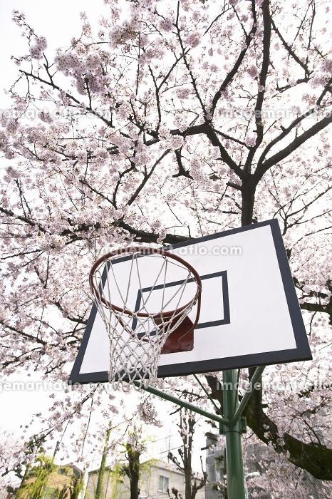 バスケットボールのゴールの販売画像