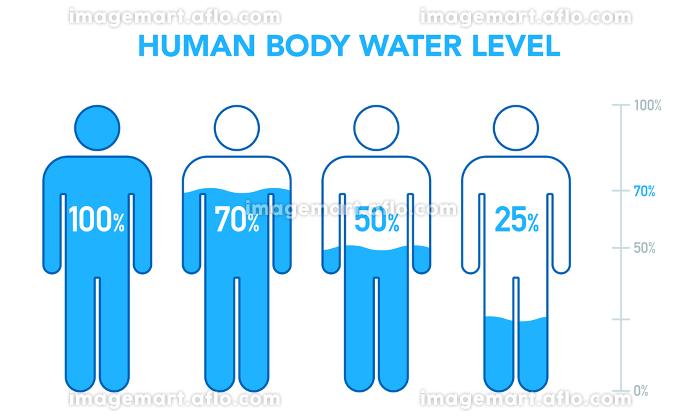 人体と水分レベルの図の販売画像