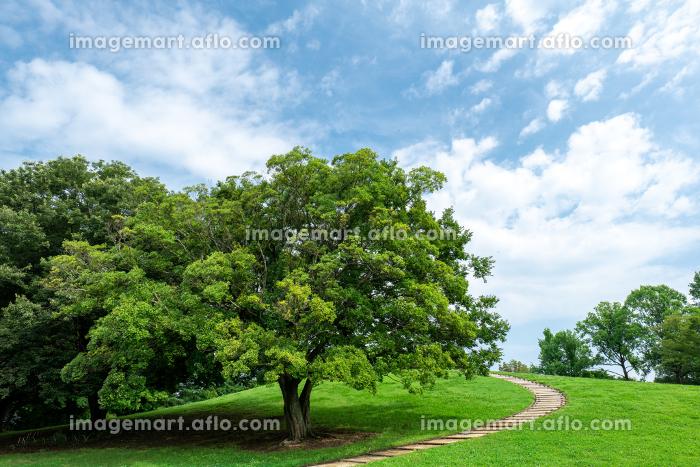 夏の古河公方公園の風景 7月の販売画像