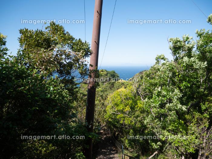 海が見える森の中にある電柱の販売画像