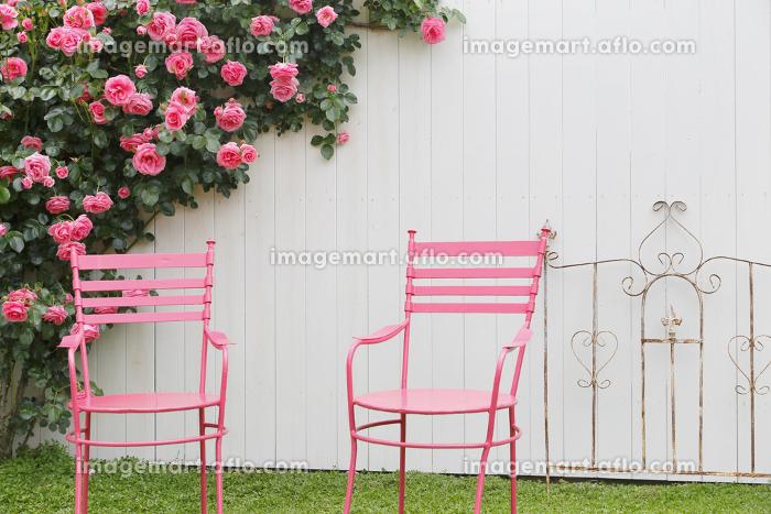 白い塀とバラの販売画像