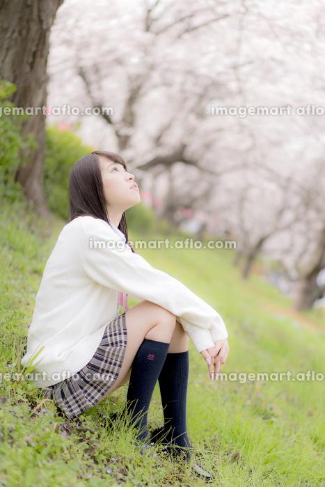 桜を見上げる女子高生の販売画像
