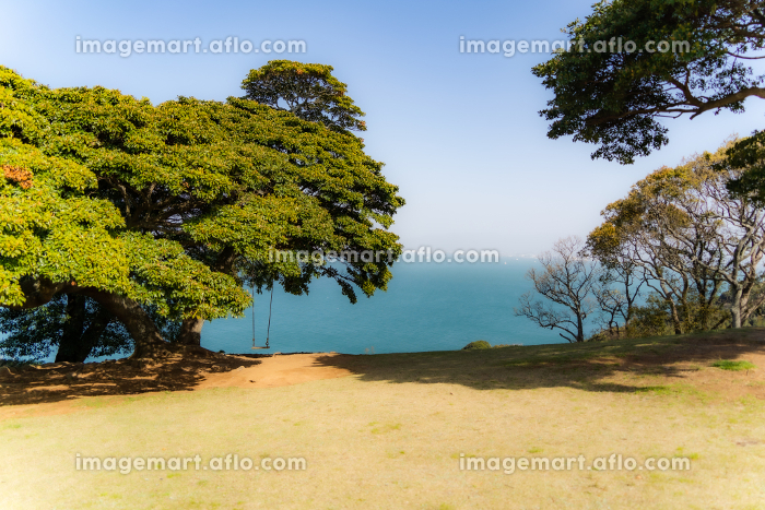 木陰のブランコとエメラルドグリーンの海の販売画像