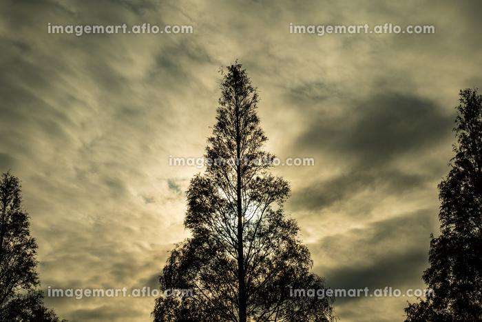 冬枯れの木 12月の販売画像