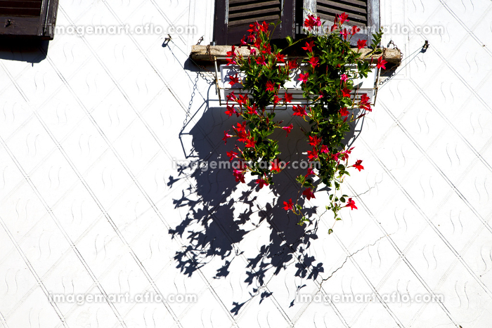 red  europe  italy  lombardy        in  the milano old   window closed brick      abstract grate   flower