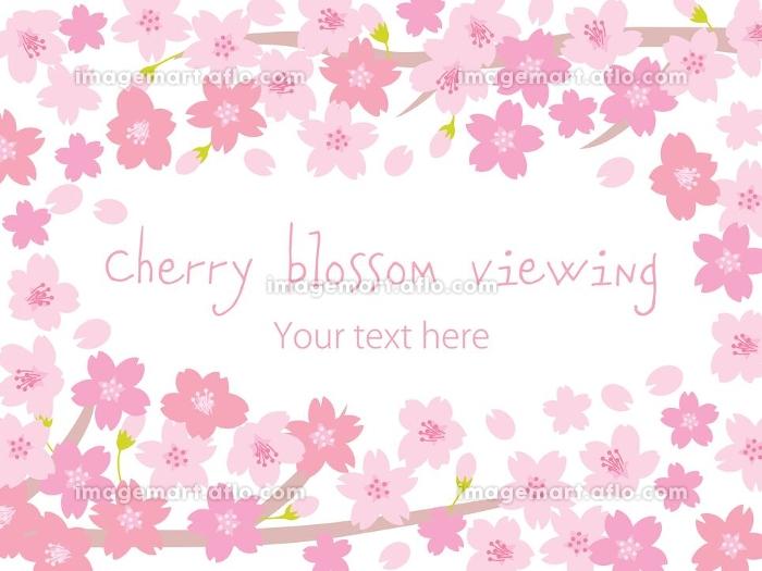 満開の桜の壁紙イラストの販売画像