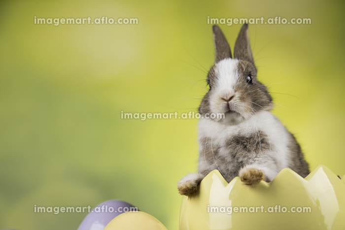 Bunny with Easter eggs on green background