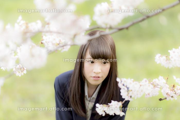 桜の前で前かがみになる女子高生の販売画像