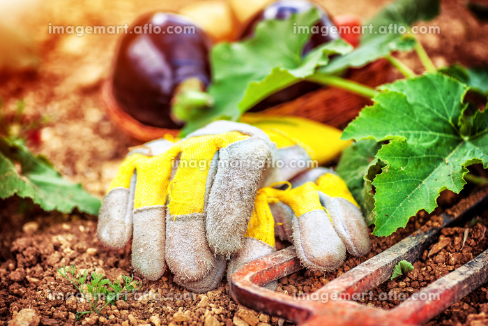 Agricultural still life outdoorsの販売画像