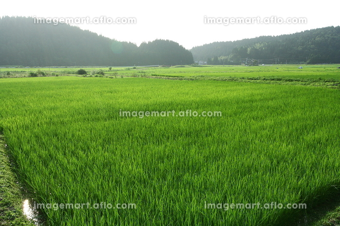 Wu Tou hot springs village;farmlandの販売画像