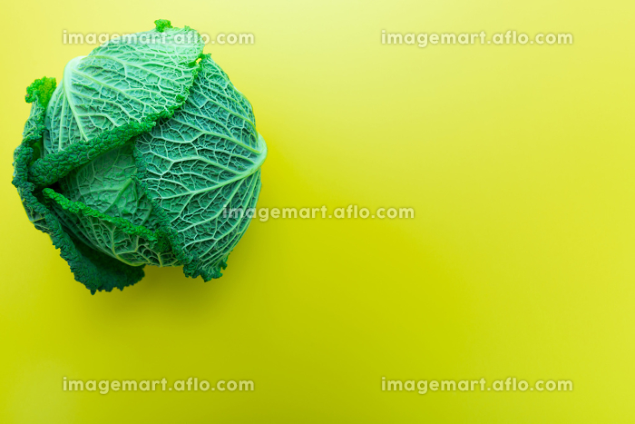 Green Savoy cabbage on yellow background, copy space