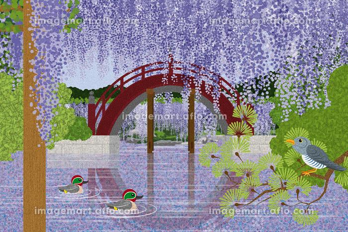 藤の花咲く亀戸天神 イラスト