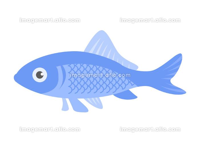 横から見た魚のイラストの販売画像