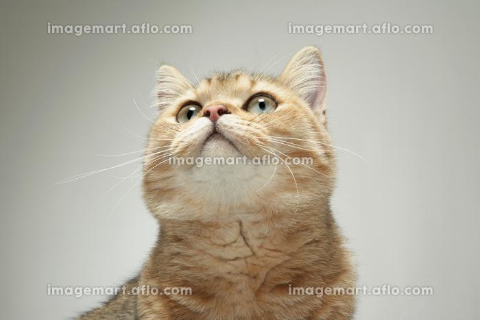 Portrait of catの販売画像
