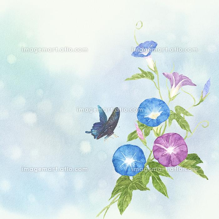 朝顔とアゲハ蝶