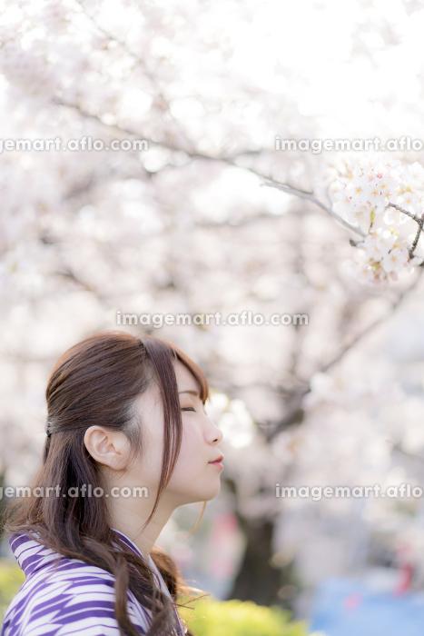 桜の前で遠くを見つめる袴の女性