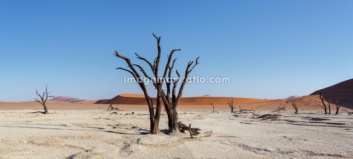 beautiful landscape of Hidden Vlei in Namib desert panoramaの販売画像