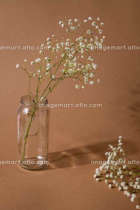 Dry flower branch on a light brown background. Trend, minimal concept with dark shadowの販売画像