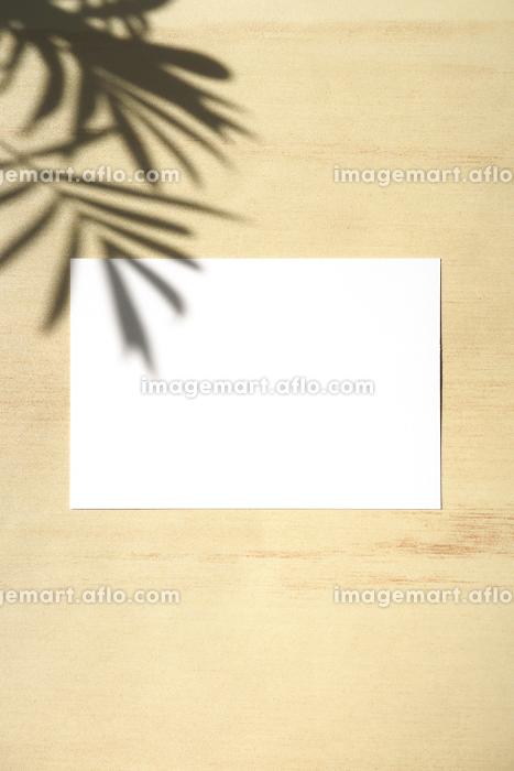 テーブルヤシの影と白いカード 8 縦位置の販売画像