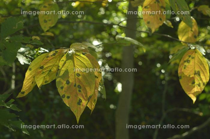 秋の公園で観察できる美しい植物(東京・2020年秋)の販売画像
