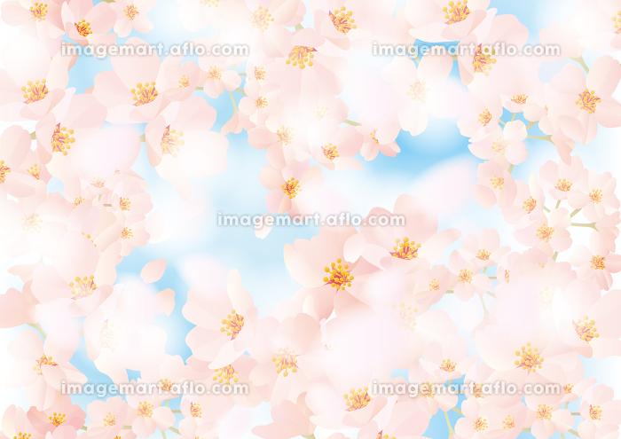 ふわふわした春の桜の背景イラスト イメージマート