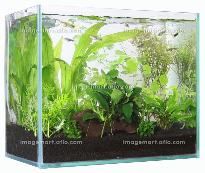熱帯魚が泳ぐ水槽の販売画像