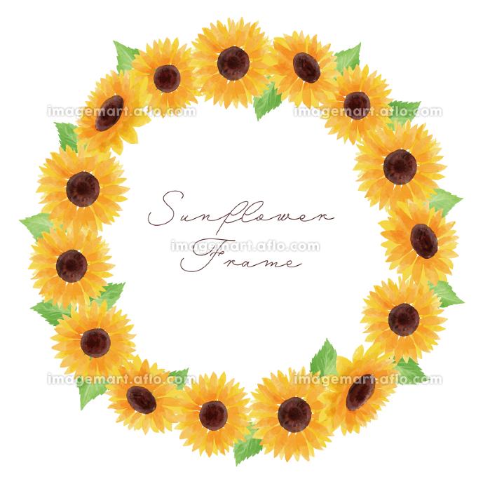 ひまわり ヒマワリ 向日葵 枠 フレーム 黄色 円形 夏 花 イラスト 手描きの販売画像