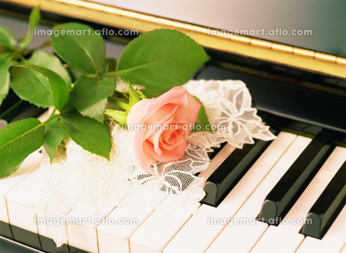 ピアノとバラの販売画像