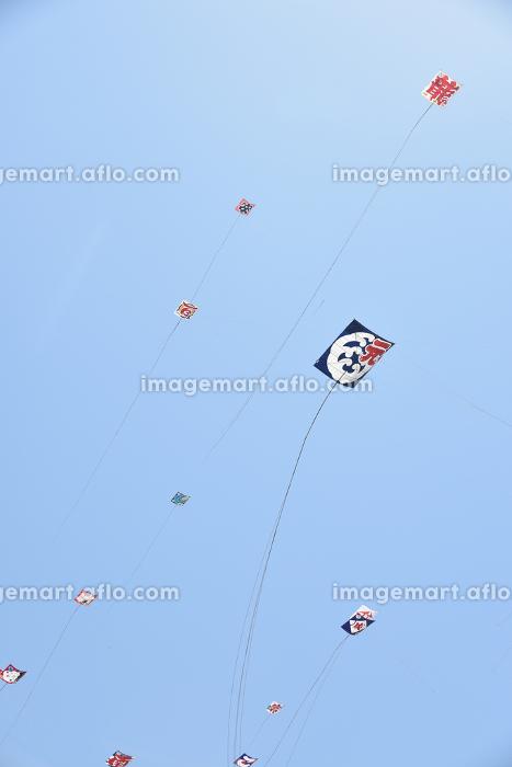 浜松祭り 凧あげの販売画像