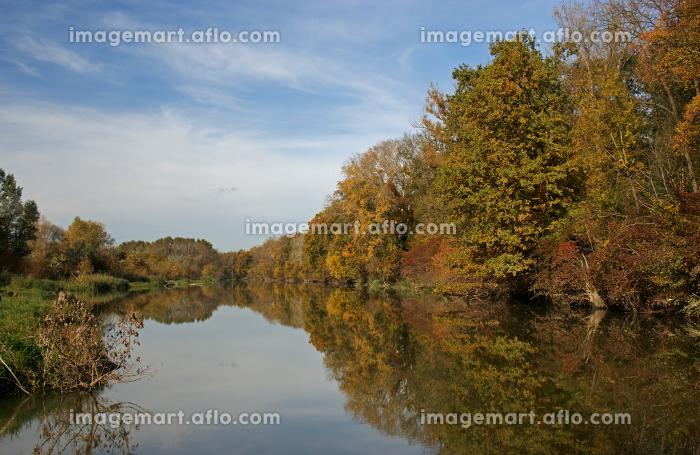 autumn in the danube floodplainsの販売画像