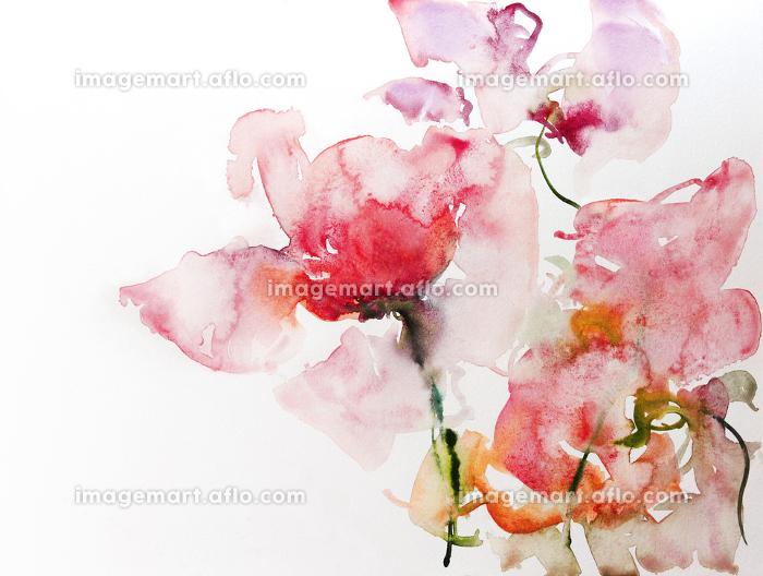 roses watercolor paperの販売画像