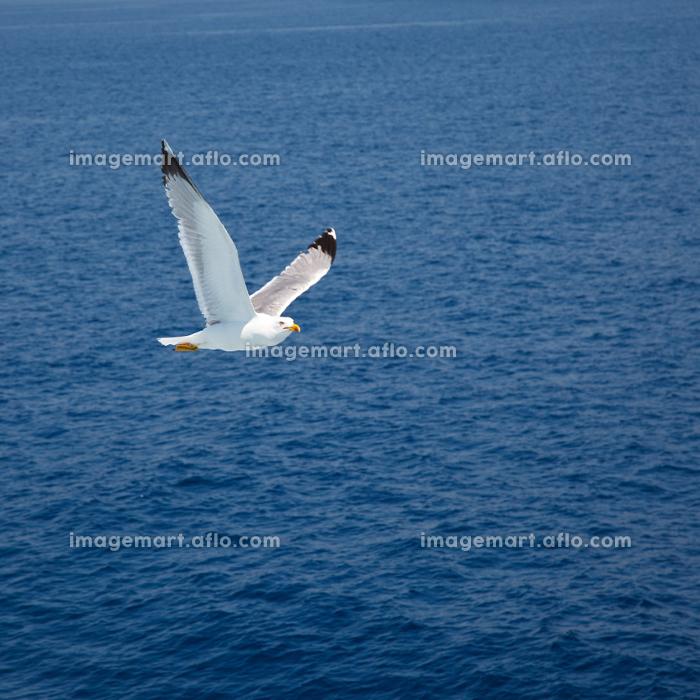 Flying seagullの販売画像