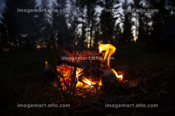 Campifire flames at sunset in the forest