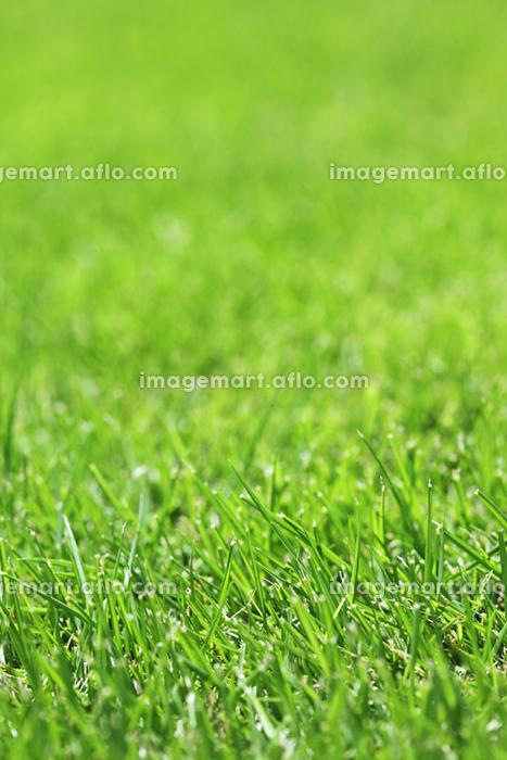 芝生の販売画像