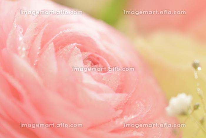バラの花の販売画像