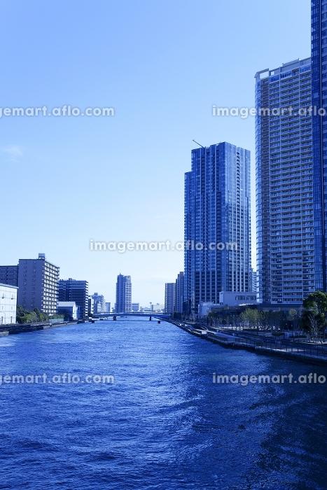 豊洲のビル群と晴海運河の販売画像