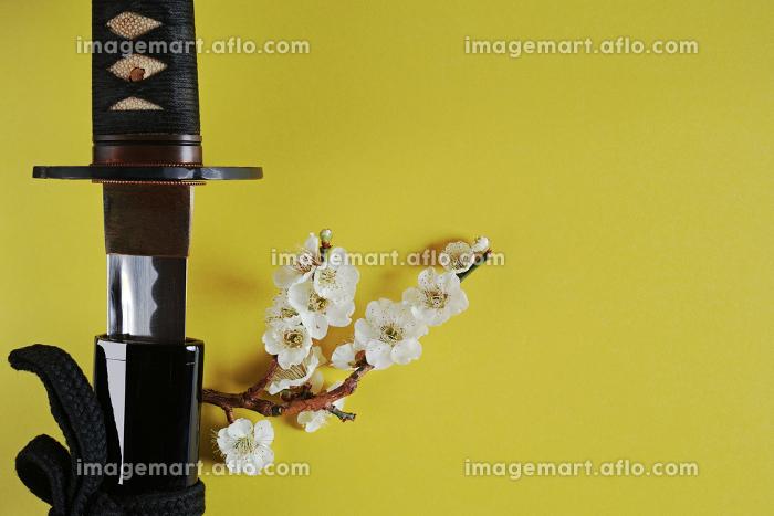 黄色い背景に少し抜いた日本刀と白い花が咲いた梅の枝の販売画像