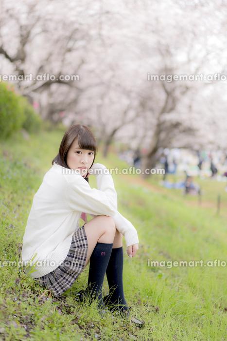 桜の木の下に座る女子高生